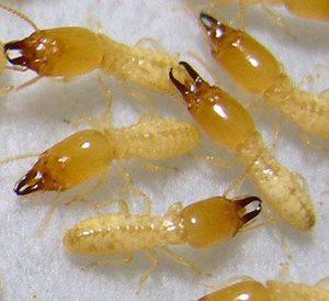 شركة مكافحة النمل الابيض برماح شركة مكافحة النمل الابيض برماح شركة مكافحة النمل الابيض برماح 8207