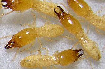 صورة شركة مكافحة النمل الابيض بابها 0555908136