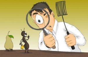 شركة مكافحة حشرات بالدوامى
