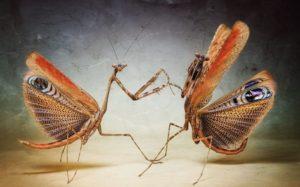 شركة مكافحة حشرات بالمزاحمية 0553551993