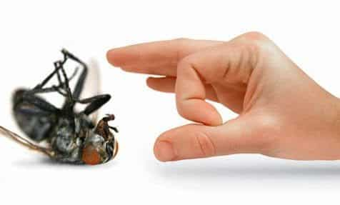 شركة مكافحة حشرات بالخبر شركة مكافحة حشرات بالخبر شركة مكافحة حشرات بالدمام والخبر 0557312007 317