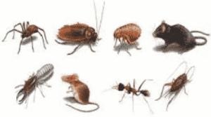 رش مبيدات حشرية بالرياض شركة رش مبيد بالرياض شركة رش مبيد بالرياض 0553551993