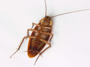 شركة مكافحة حشرات بالرياض شركة مكافحة حشرات بالرياض شركة مكافحة حشرات بالرياض 0532233702