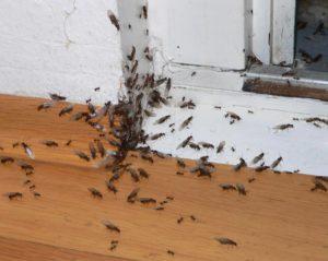 مكافحة الصراصير بالرياض شركة مكافحة حشرات بالرياض شركة مكافحة حشرات بالرياض 0553551993