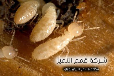 شركة مكافحة النمل الابيض بجازان 0555024104