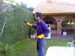 شركة مكافحة حشرات ببيشة . شركة مكافحة حشرات ببيشة شركة مكافحة حشرات ببيشة 0555024104