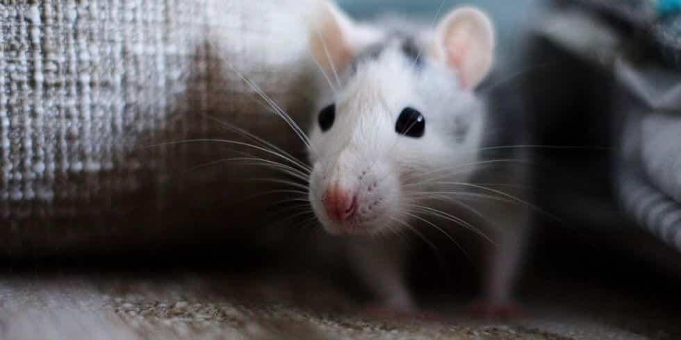 شركة مكافحة الفئران بالرياض 0553551993