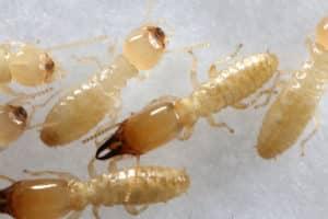 شركة مكافحة النمل الابيض بالباحة . شركة مكافحة النمل الابيض بالباحة شركة مكافحة النمل الابيض بالباحة 0555024104