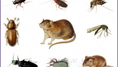 Photo of شركة مكافحة حشرات بشقراء 920008956