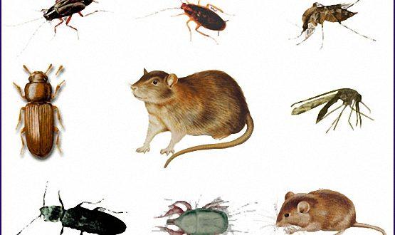 شركات مكافحة حشرات بشقراء