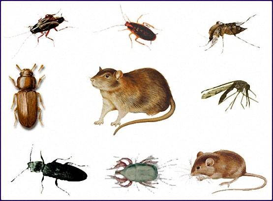 شركة مكافحة حشرات بشقراء 0553551993