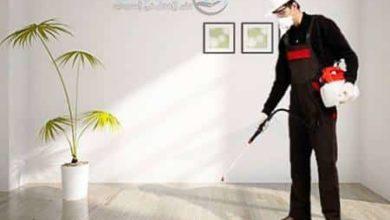 Photo of شركة مكافحة حشرات بالمدينة المنورة 0569730844