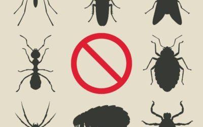 شركة مكافحة حشرات بالدمام والخبر