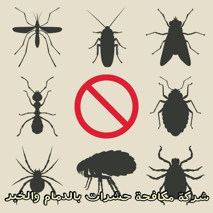 Photo of شركة مكافحة حشرات بالدمام والخبر 0557312007