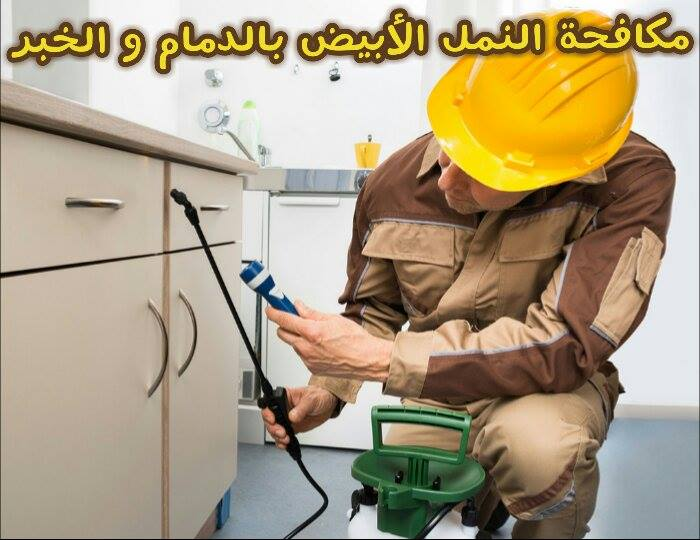 Photo of شركة مكافحة النمل الابيض بالدمام والخبر 0557312007