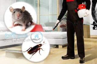 شركه مكافحه الحشرات بالبقيق