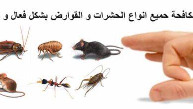 Photo of شركة مكافحة العته بمحايل عسير 0507394007