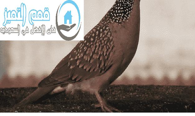 شركة مكافحة حمام بالمدينة المنورة