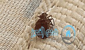 شركة مكافحة حشرات الدمام والخبر