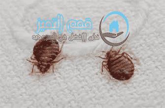 Photo of شركة مكافحة العته بجدة 0537132712