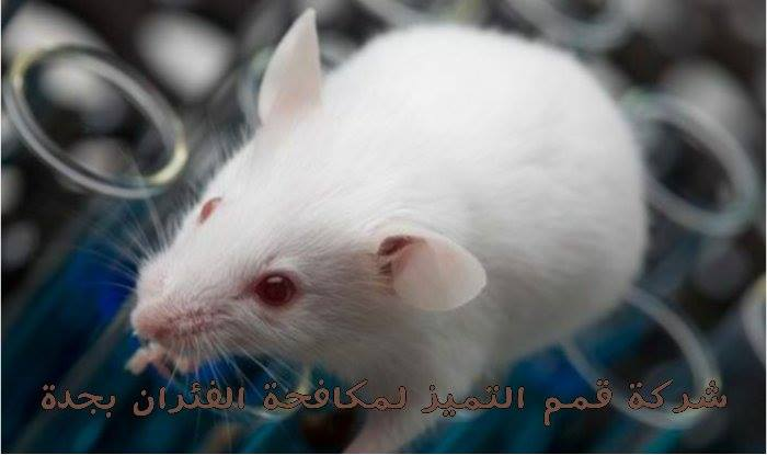 Photo of شركة مكافحة فئران بجدة 0537132712