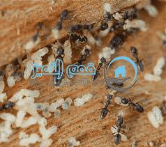 Photo of شركة مكافحة النمل الابيض بالمزاحمية 920008956