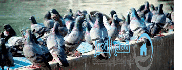 Photo of شركة تركيب طارد حمام بالمدينة المنورة 0553180485