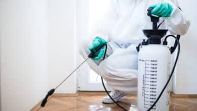 صورة شركة مكافحة حشرات بالدمام 0555908136 رش مبيدات حشرية – قمم التميز